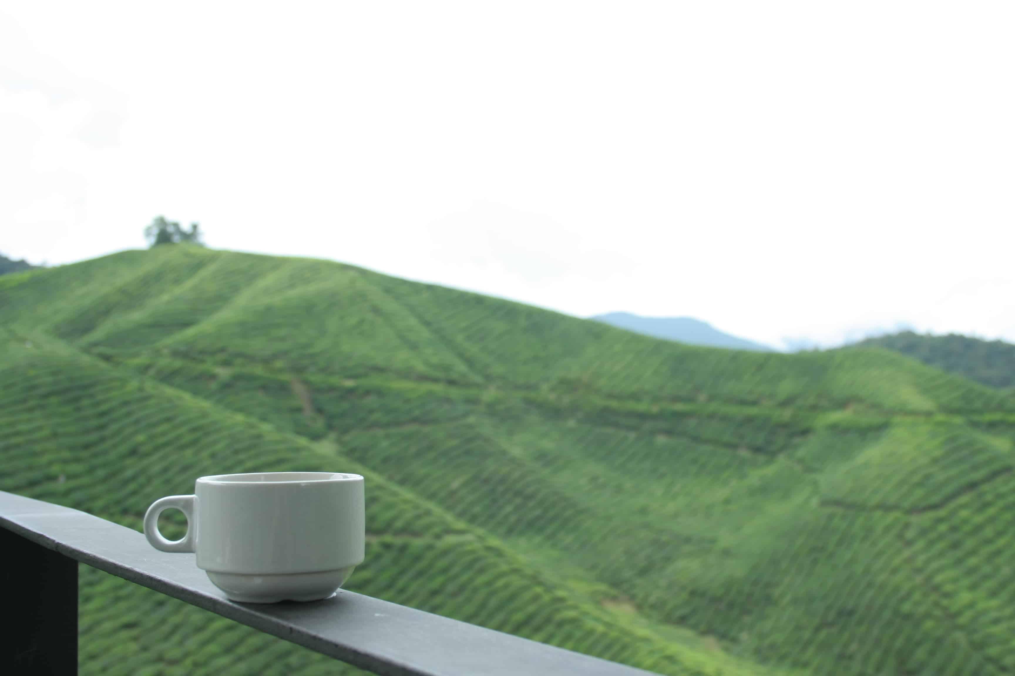 Boh Tea Plantation Fields in Cameron Highlands, Malaysia