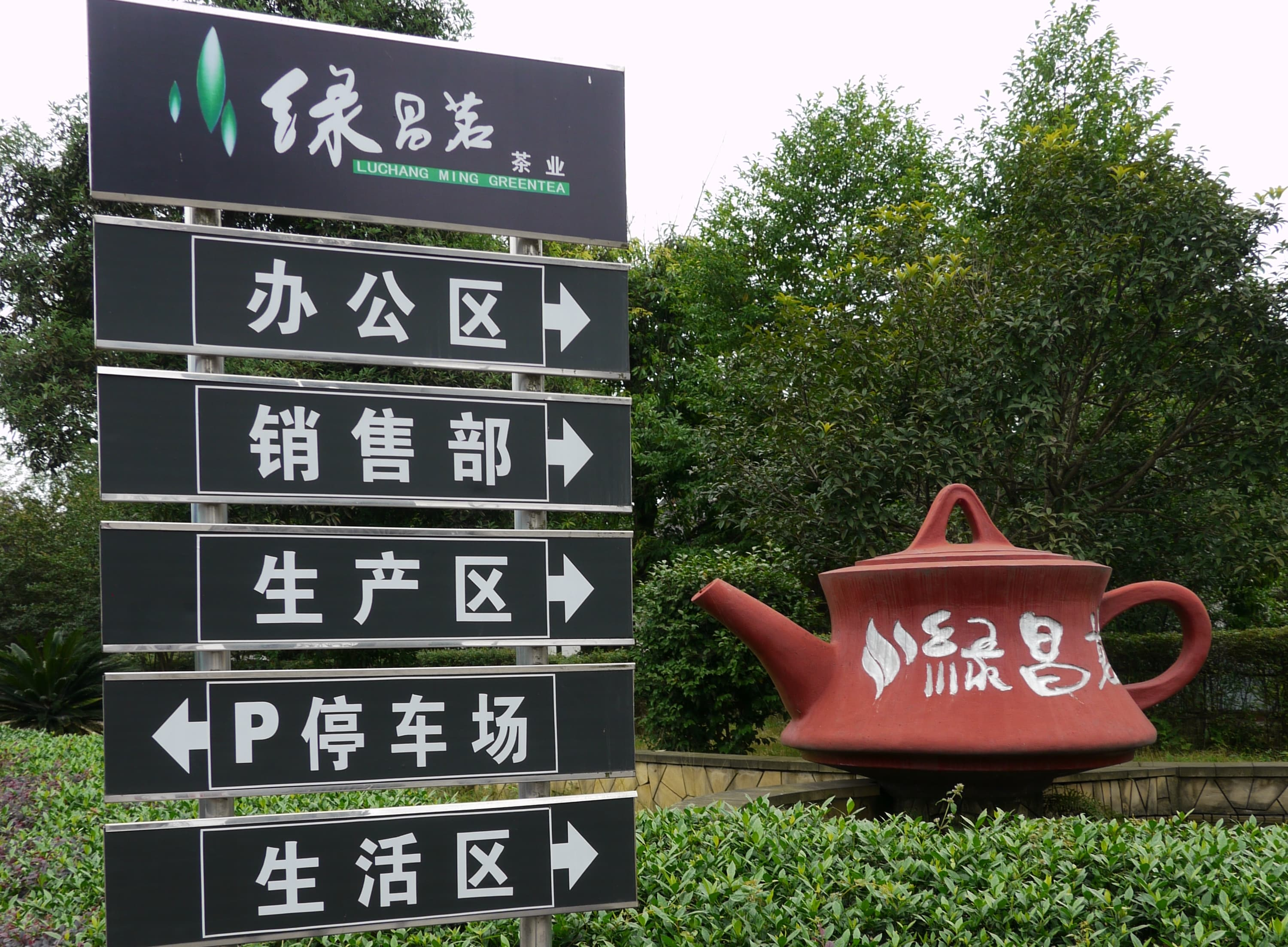 Understanding Chinese Tea Harvest