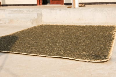 Tea drying in the sun on a bamboo mat