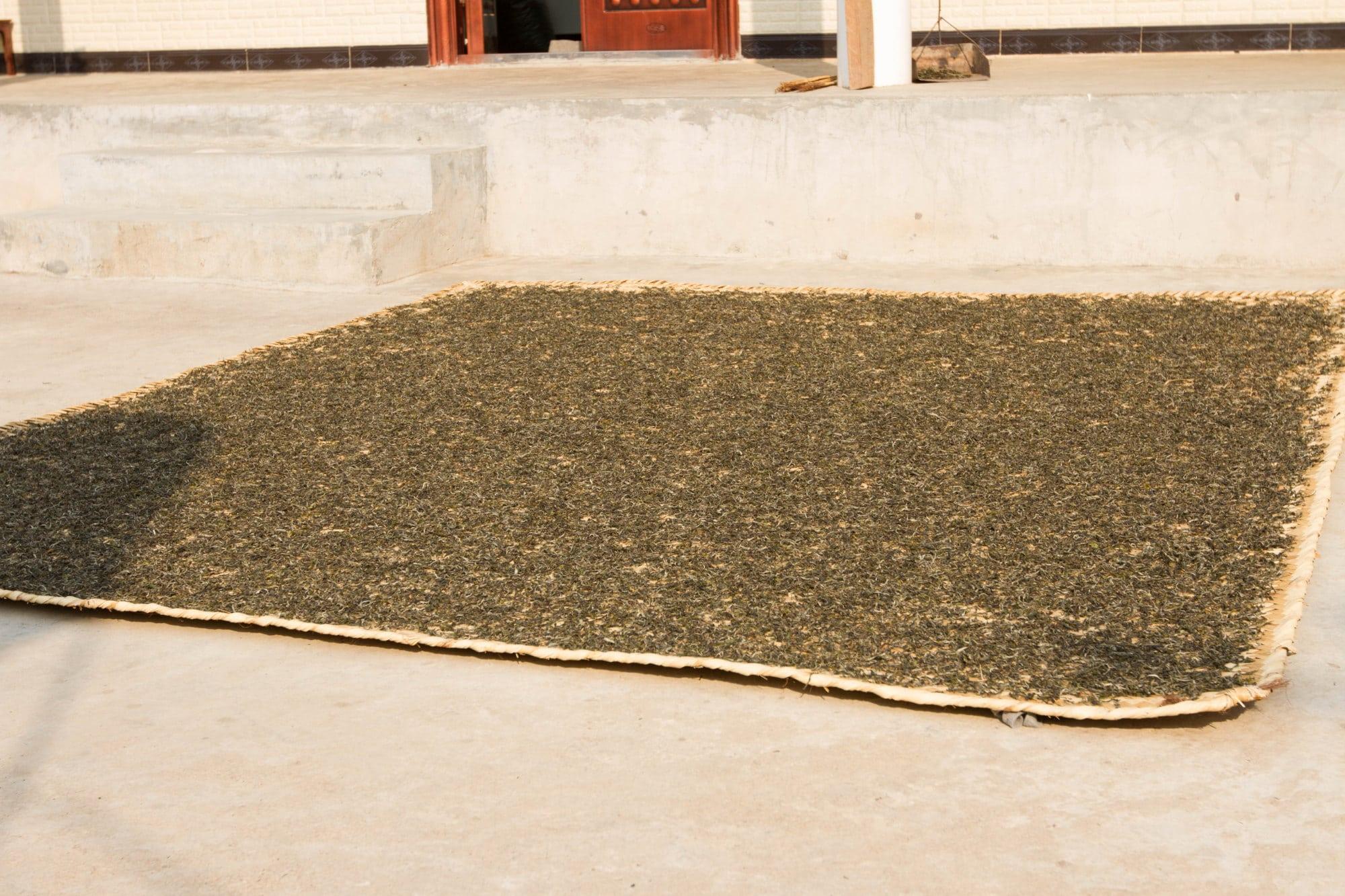 Tealet's Michael Petersen took this photo of tea sun drying