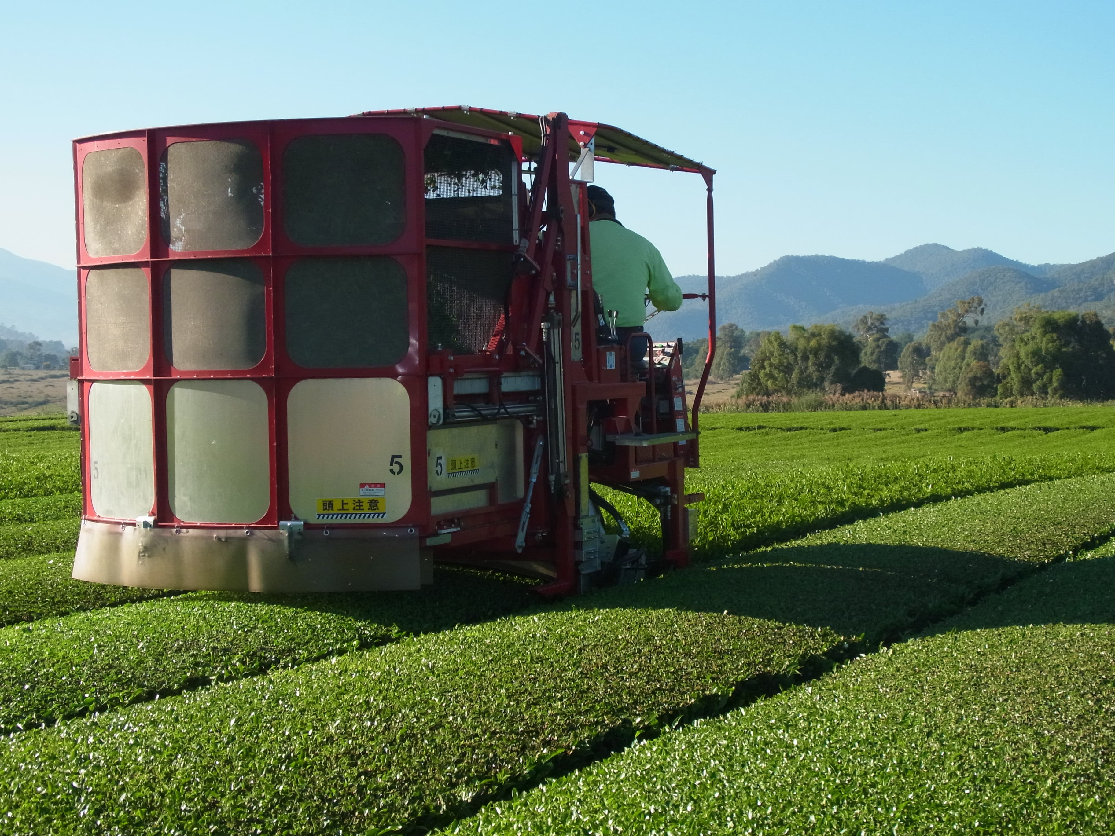 tea harvester machine