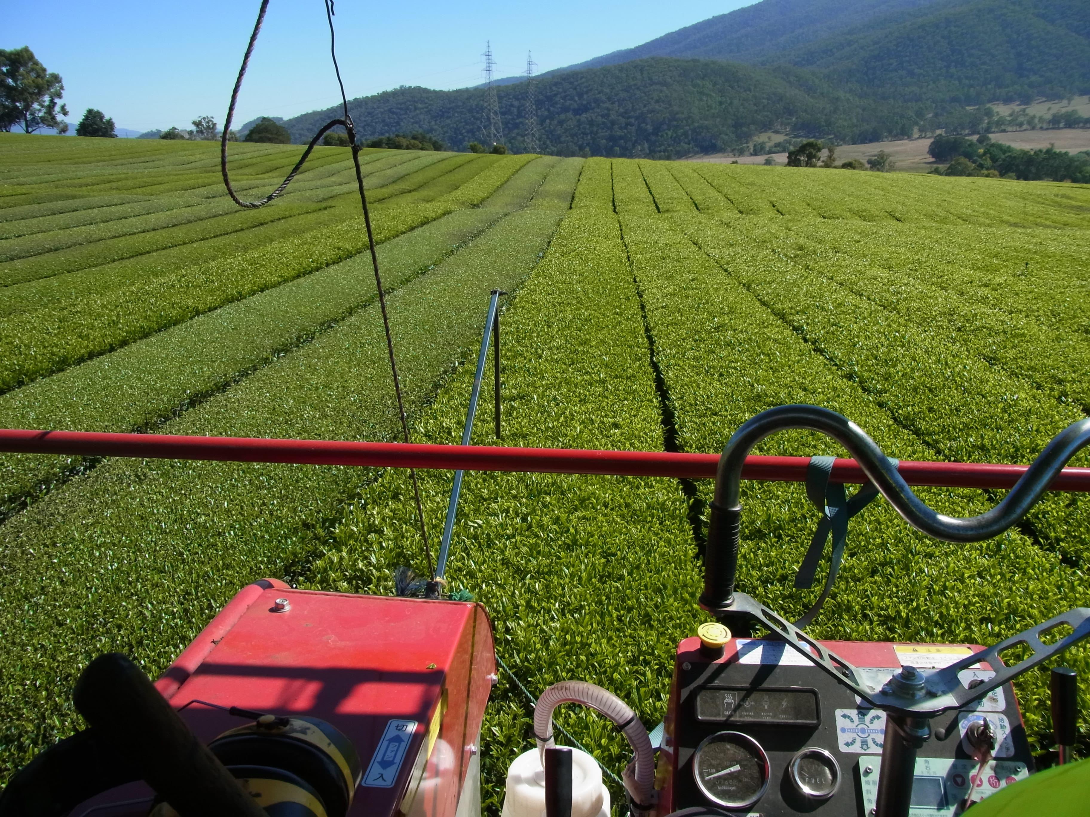 tea harvester machine