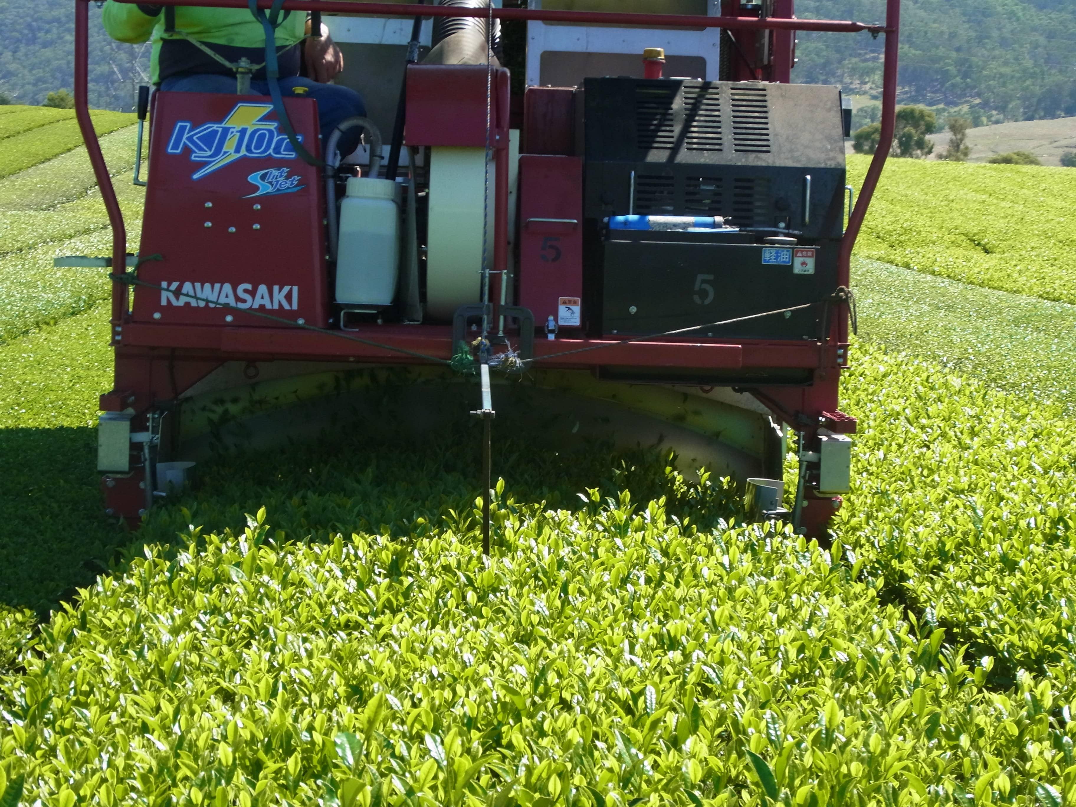 tea harvester in action
