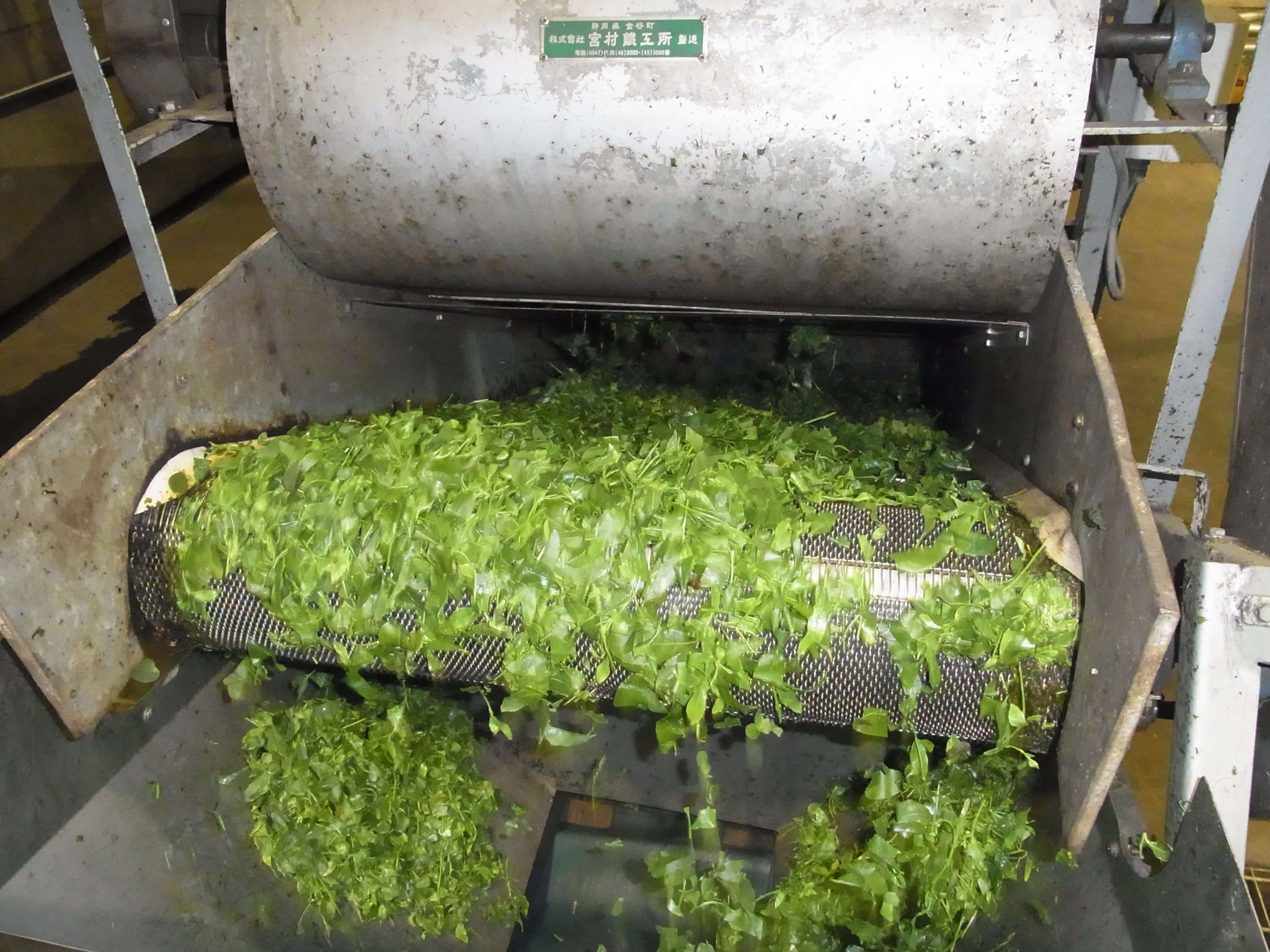 tea leaves being fed into steamer