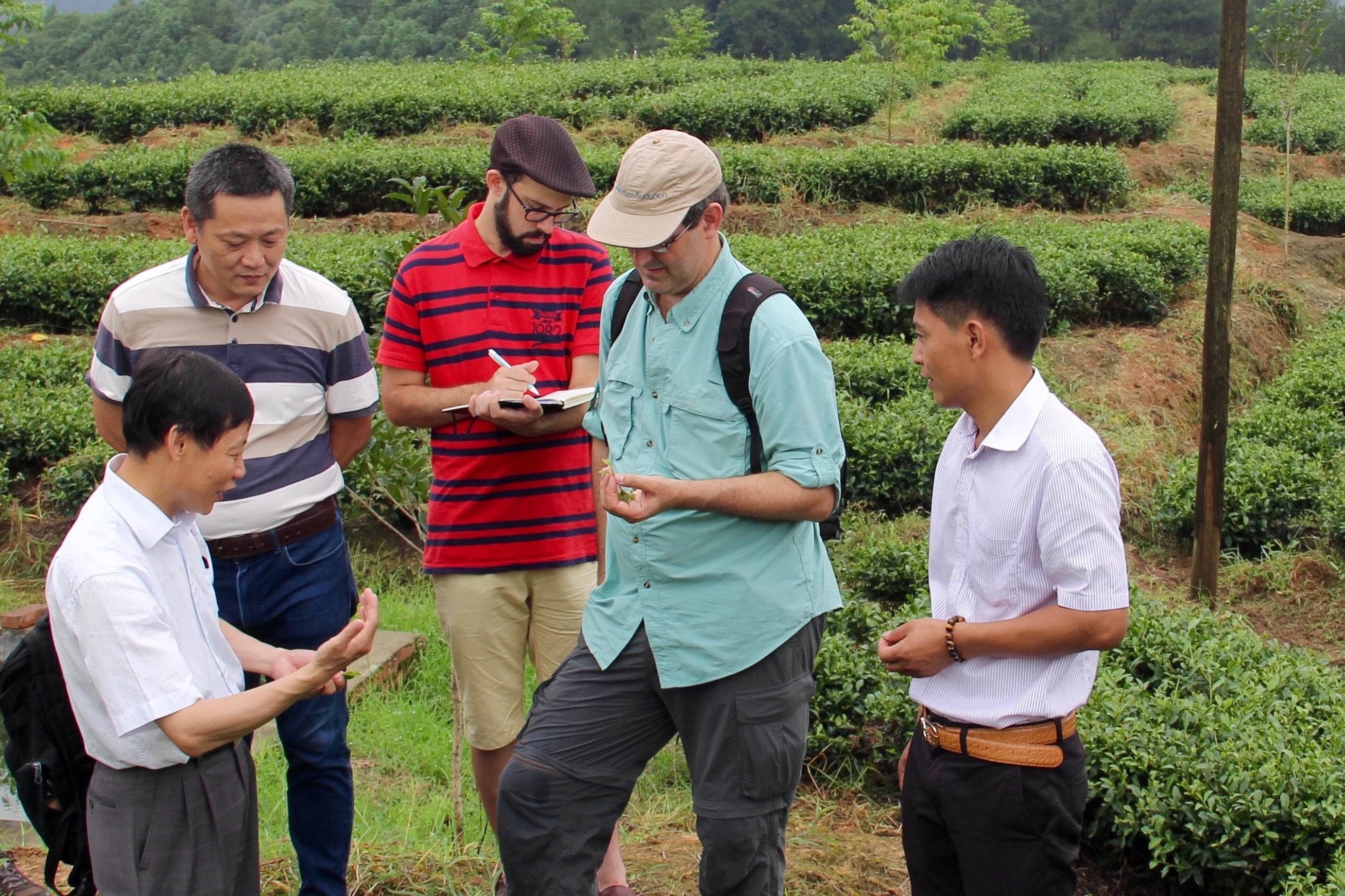 Photo in Shanfu Tea Company Tea Field