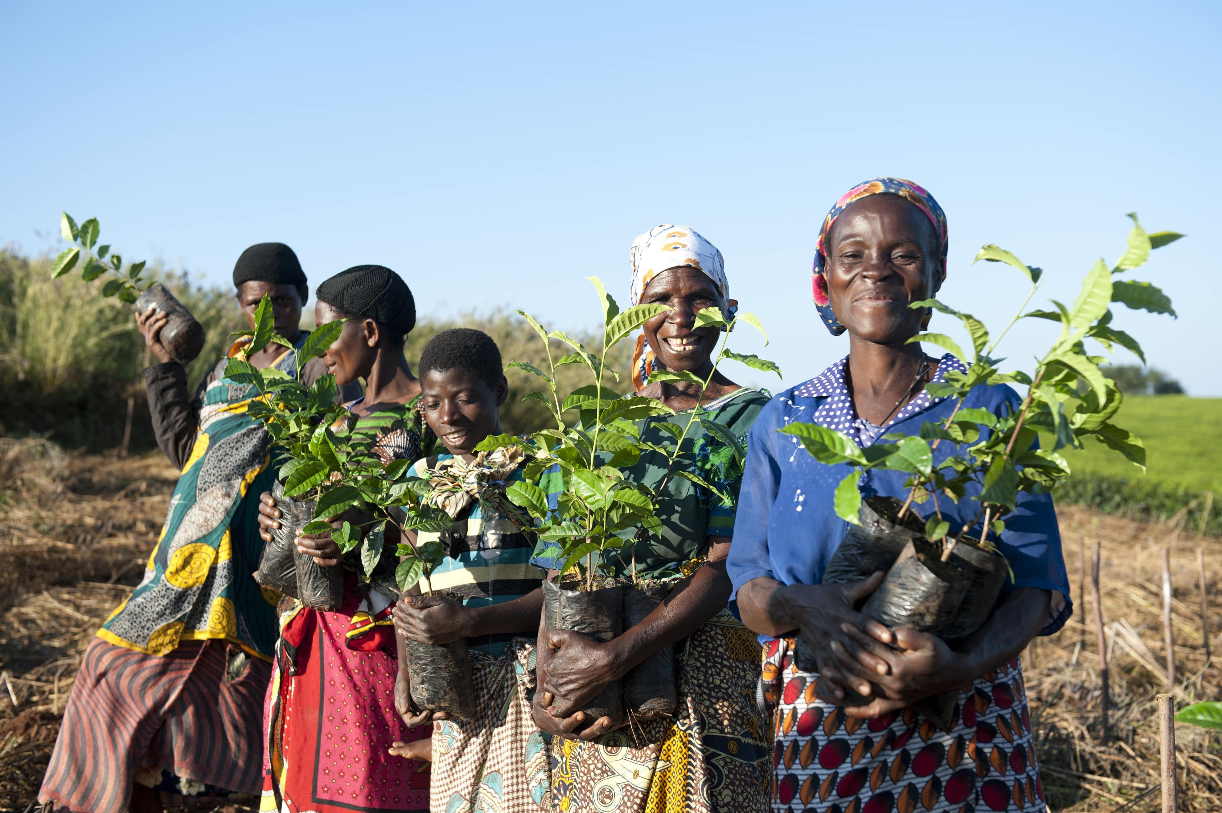 Women holding tea plants