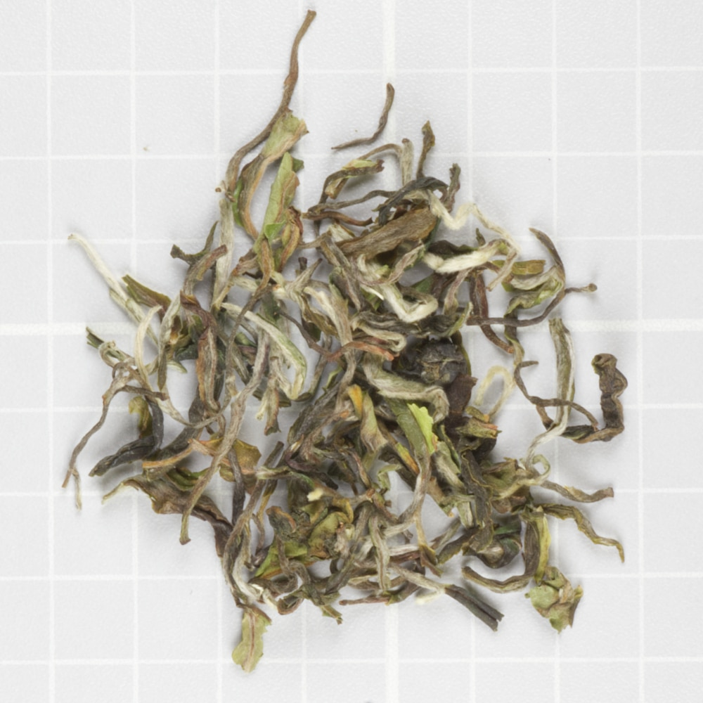 Darjeeling Moonshine from Glenburn Tea Direct