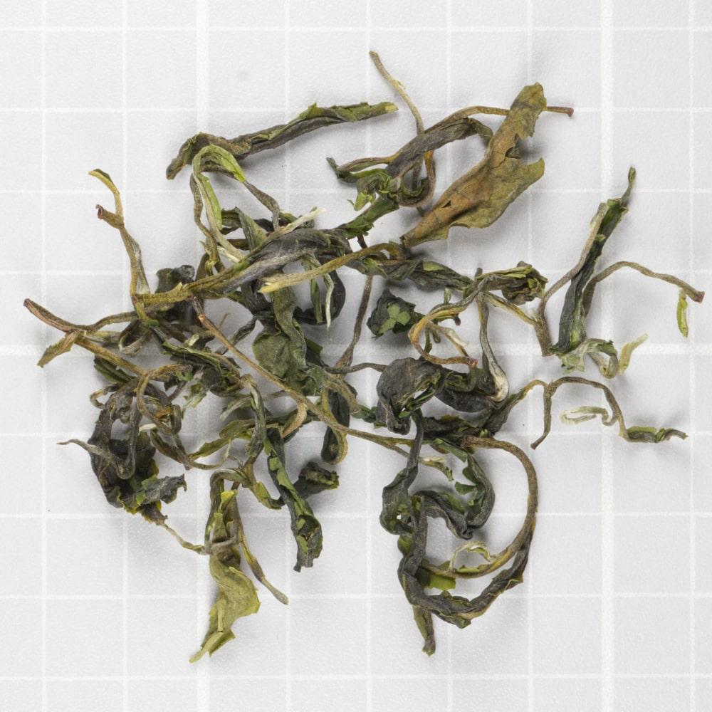 Koliapani Autumnal Xuwola Green